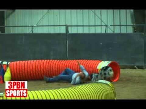 Dog Agility Bloopers: Sonny & Zak Agility Tunnels.wmv
