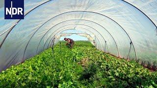 Regionale Landwirtschaft: Wenn Essen wieder was wert ist | die nordstory | NDR Doku