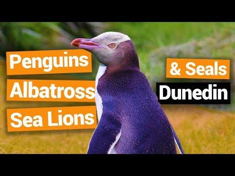 Elm Wildlife Tours in Dunedin  –  New Zealand's Biggest Gap Year – BackpackerGuide.NZ