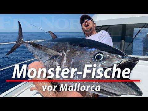 Monster-Fische Vor Mallorca | Angeln Auf Thunfisch Und Schwertfisch Im Mittelmeer