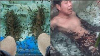 Người đàn ông khiến cả đàn cá massage lăn ra c.h.ết chỉ sau 5 phút bởi lí do không tưởng