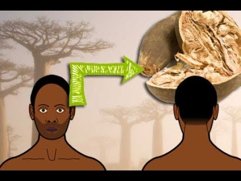 Baobab vom Affenbrotbaum Das passiert wenn du es isst