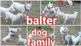 Balter dog... balter dog family ..balter dog training