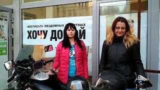 Выставка бродячих собак в СПб