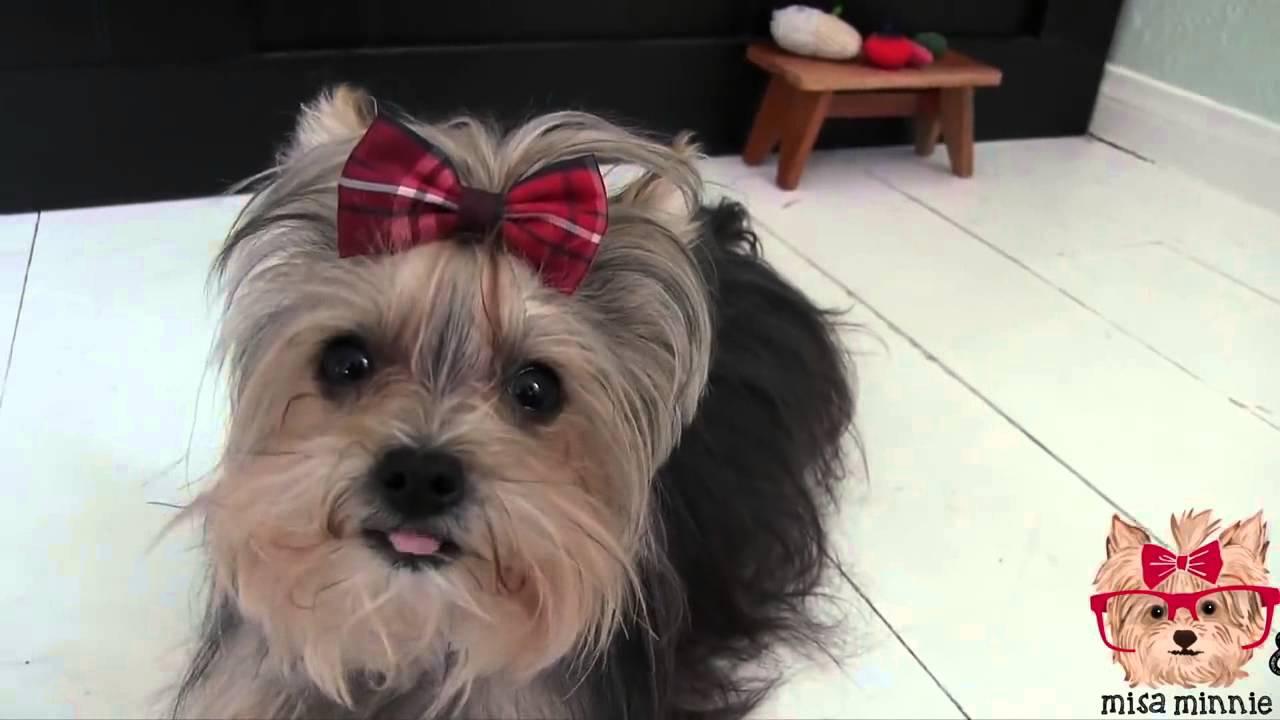 ყველაზე ჭკვიანი ძაღლი