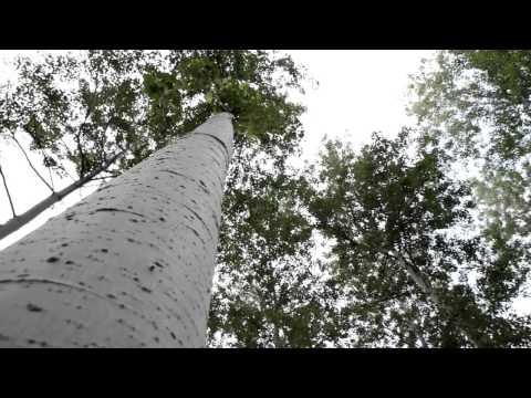 한국, 기적의 산림녹화 세계를 놀라게 하다 (2