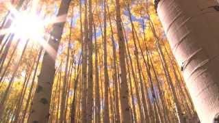 Lakshmi Gayatri Mantra - The Four Paths of Abundance from Music for Deep Meditation