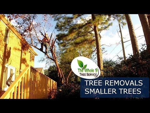 small-tree-removal-process