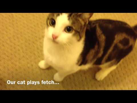 Our Cat Plays Fetch...