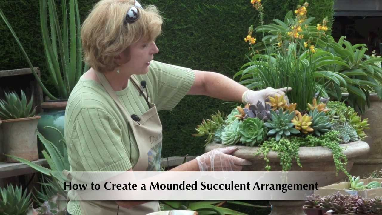 Simple gardens ideas - How To Make A Mounded Succulent Arrangement Youtube