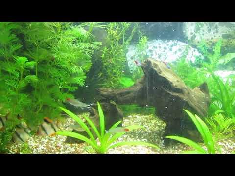 How To Decorate A Beautiful Green Fish Tank (deco-ideea)