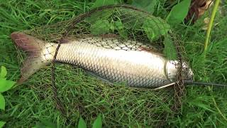 Big Rohu Fishing Videos By Fish Watching