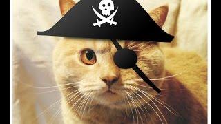 Как вылечить глаза у кота
