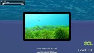 Video Invasive Species Google Earth Tour Video download MP3, 3GP, MP4, WEBM, AVI, FLV Agustus 2018