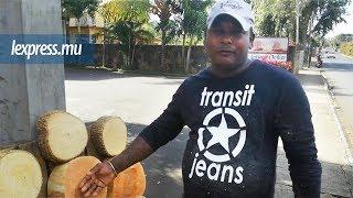 Ajay, «marsan biyo»: son pain quotidien c'est le bois
