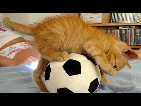 Cats Playing With Ball Compilation