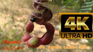 video 4k ultra hd Nature relax Highest Quality Rendered to 4K 60fps 2160p UHD