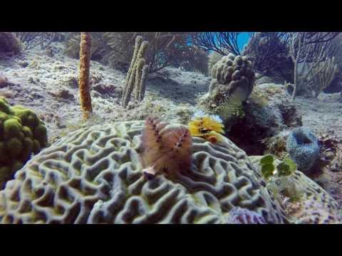 Scuba Diving San Andrés Island Colombia