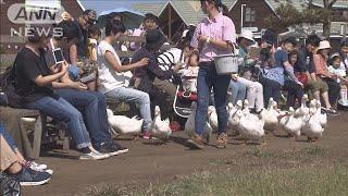 台風被害のマザー牧場が再開 子どもたち大喜び(19/09/28)