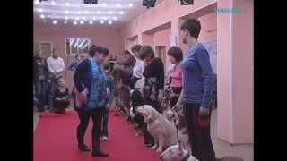 Канистерапия. Собаки в Питере