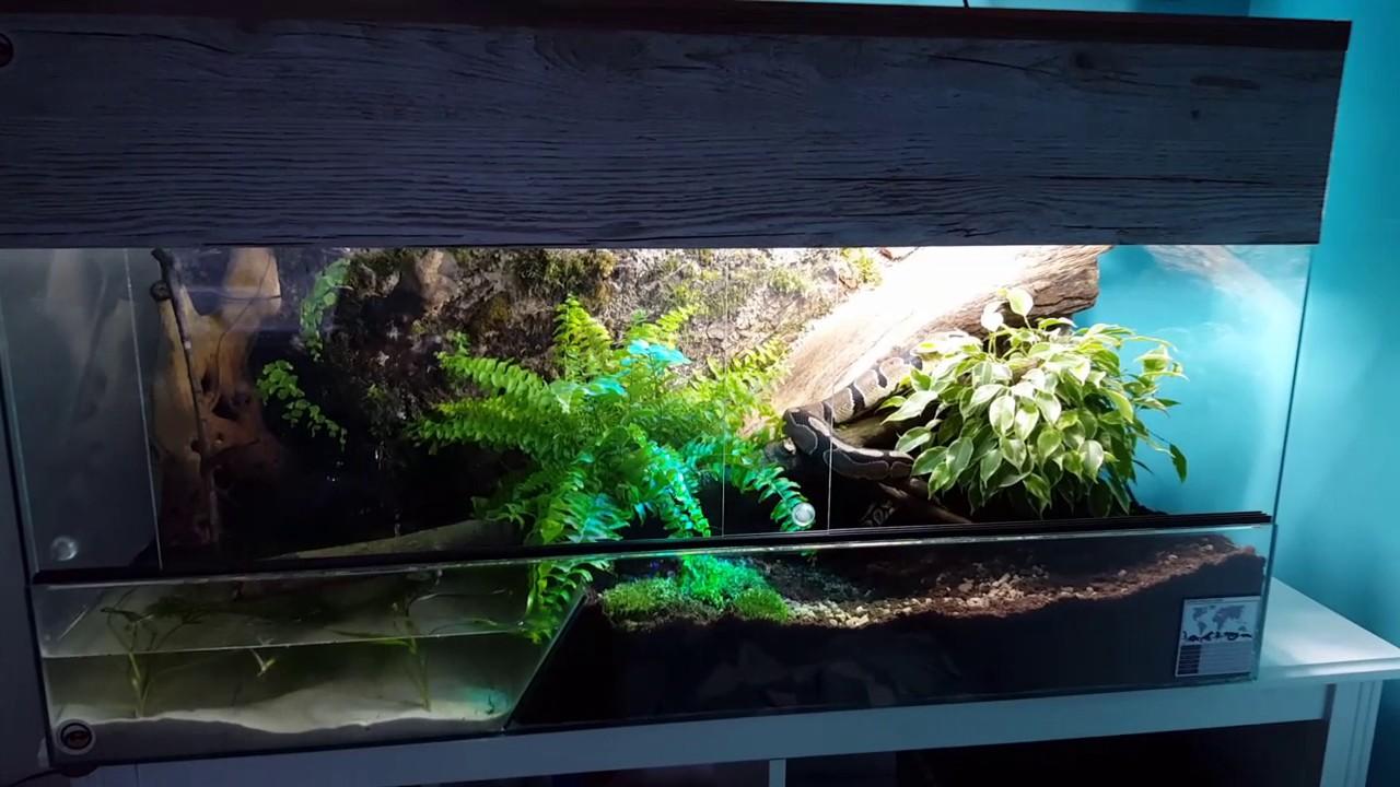 Royal python natural vivarium  YouTube