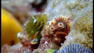 Coral reef wonderland | Wild Indonesia | BBC