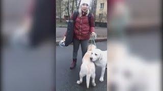 Таксист отказался везти даму с собачками