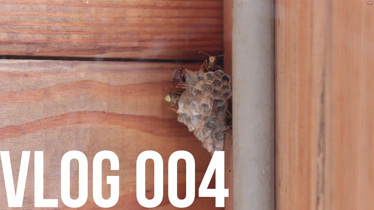 how to get a wasp nest down