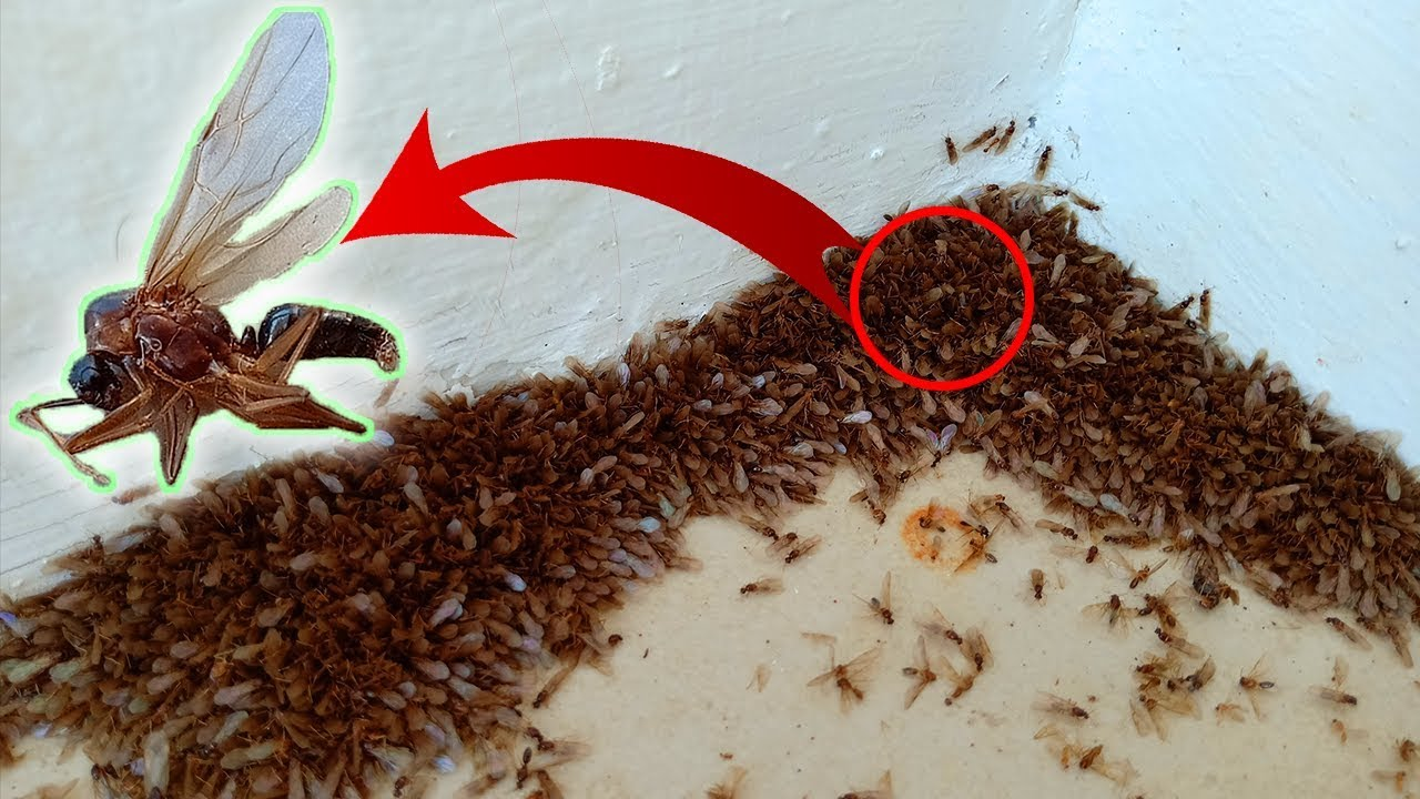 Flying Ant Infestation Youtube