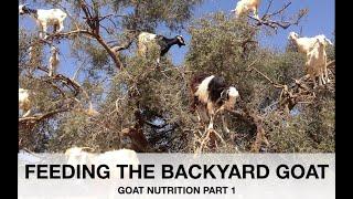 Feeding the Backyard Goat | Sez the Vet