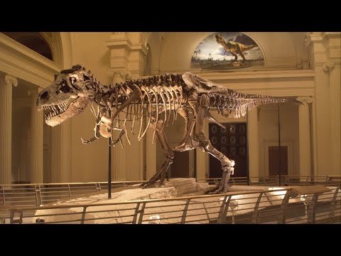 Sue the T. rex gets new home in the Field Museum