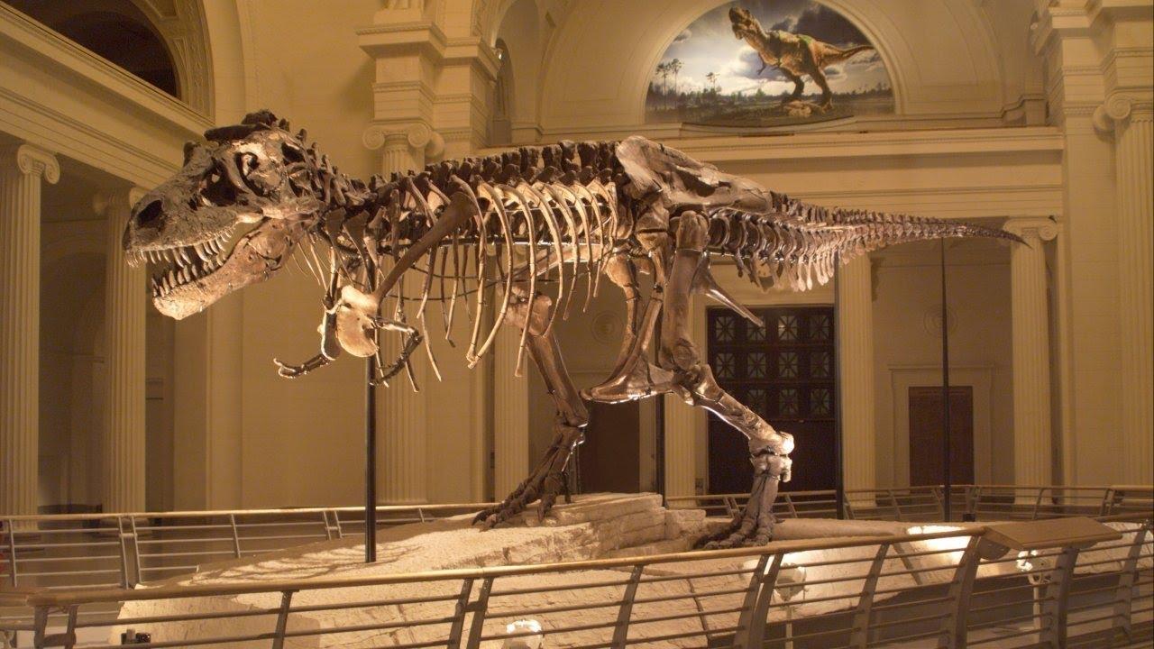 12 Agustus dalam Sejarah: Sue Ditemukan, Kerangka T-Rex Paling Utuh yang Pernah Digali