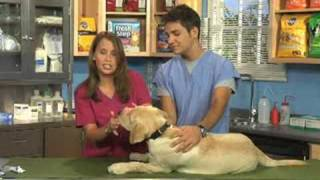 Doggie Dental  Ep2