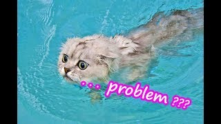 Funny Cat & Dog Vines Compilation Videos 2019 #6|  Funny Animals  Videos