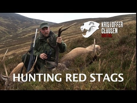 Hunting Red Stags In Scotland By Kristoffer Clausen, Awesome Killscenes