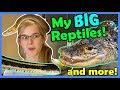 Reptile House Tour! (Part 2!)