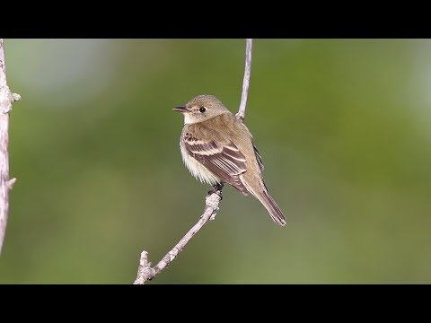 Decades Of Bird Signals, Songs Digitized For Scientific Research - Science Nation
