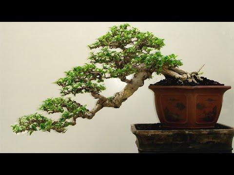 Curso Arte e Técnica do Bonsai - Ferramentas para Bonsai - Cursos CPT