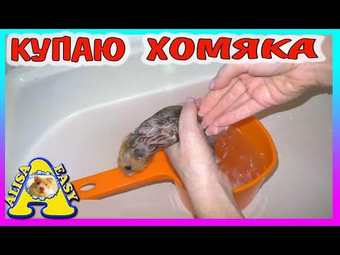 ХОМЯК С ПОМОЙКИ ИЗЮМЧИК - КУПАЮ / СПАСЕНИЕ ХОМЯКА / Alisa Easy Pets