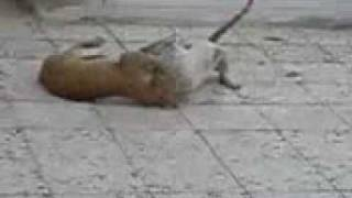Wild Cats Fight