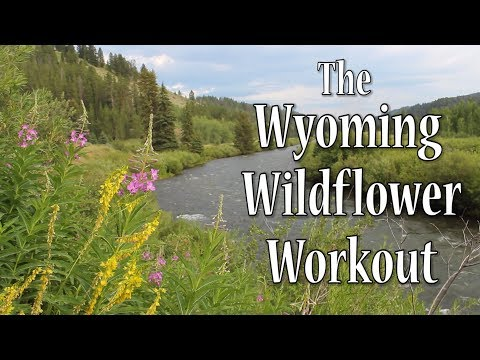 Fit For Your Adventure - Wyoming Wildflower Workout