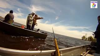 Người Cá Vô Tình Được Camera Quay Lại Ngoài Đời Thật