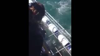 rekin ludojad o wlos od rozszarpania czlowieka