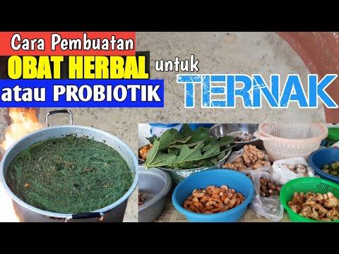 cara-membuat-ramuan-lengkap-obat-herbal-untuk-ternak-babi/ayam