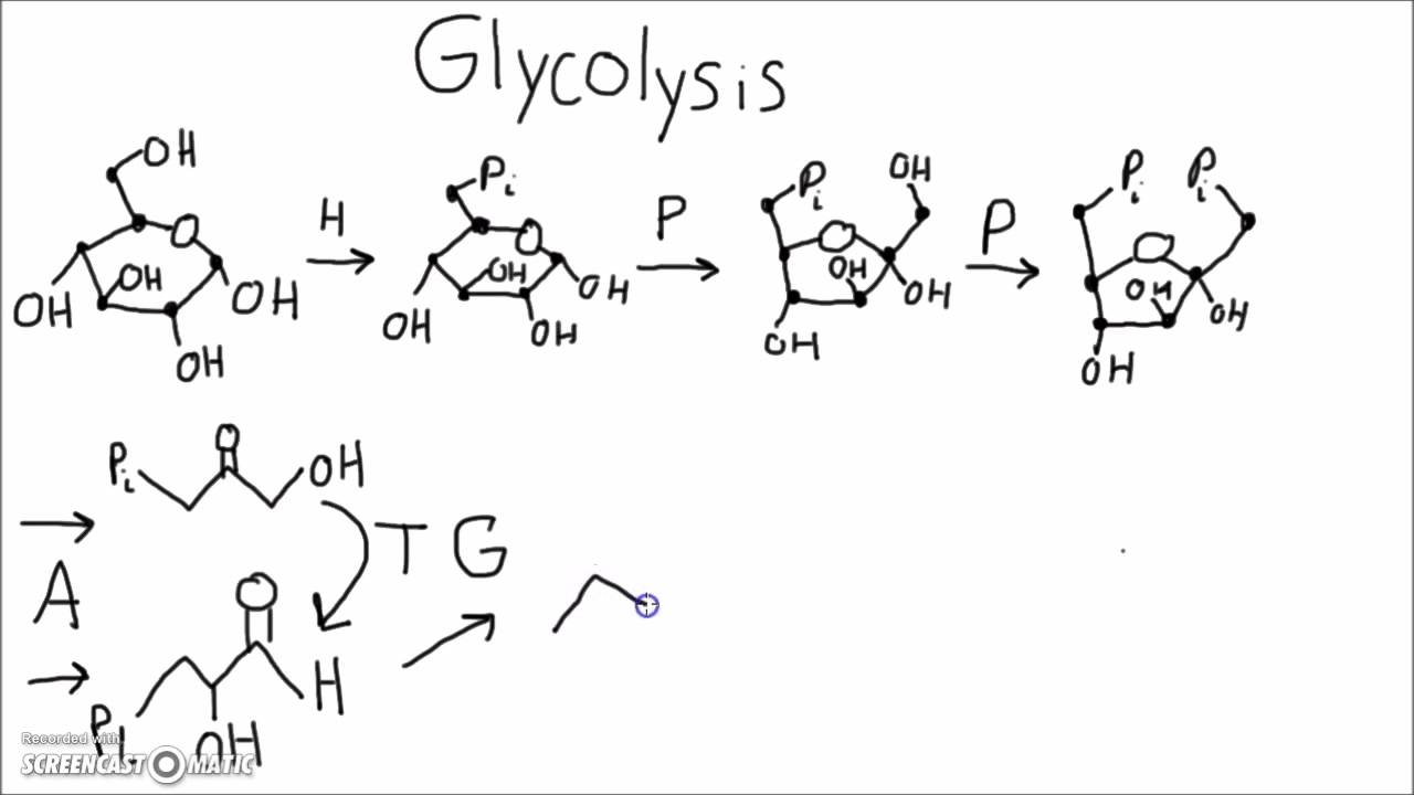 Biochemistry memorize glycolysis using this mnemonic youtube ccuart Images
