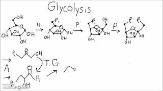 Biochemistry - Memorize Glycolysis Using This Mnemonic