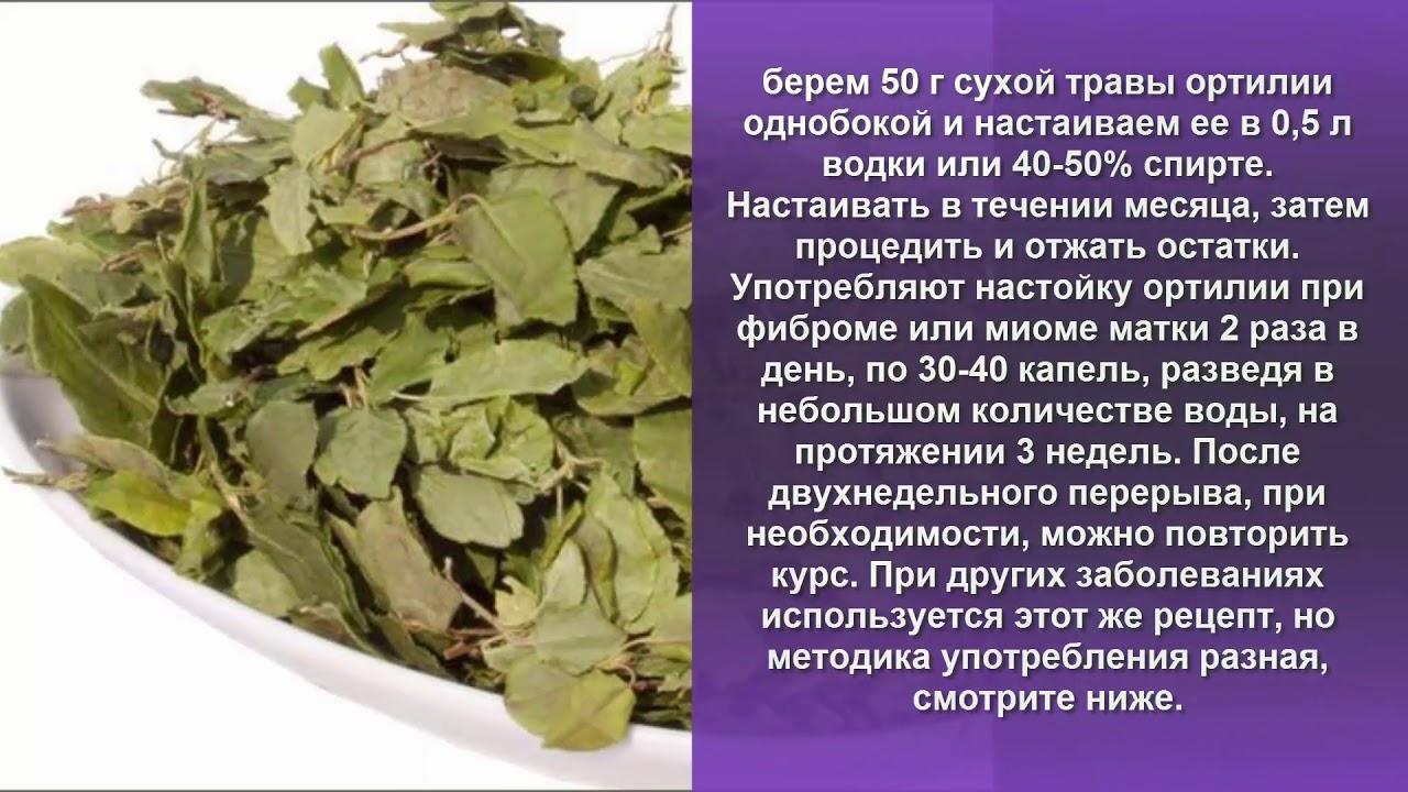 Миома Лечение народными средствами Травы Боровая матка Огуречная .