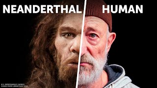 Who Would Win: You VS. Neanderthal