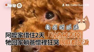 貴賓犬借住阿嬤家2天以為遭棄...牠回家躺爸懷裡狂哭都是淚QQ|寵物|狗狗