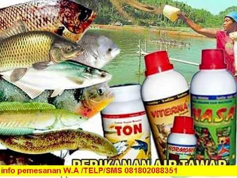 Pemesanan 081802088351 Xl Obat Ikan Cupang Youtube